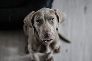 Léčba psa může vyjít na desetitisíce. Většinu zákroků pokryje pojištění